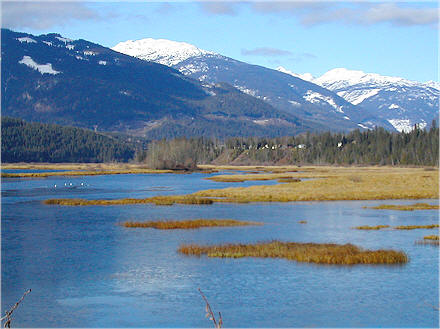 Airport wetlands as seen from the Revelstoke Flying Club. (White dots are swans with their heads down feeding). Michael Morris photo