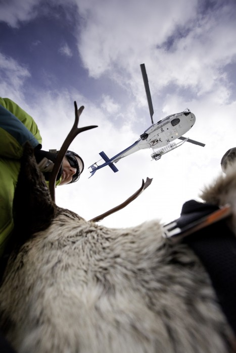 Wildlife-Ecologist-Alex-Taylor-unload-mother-caribou_Photo-Rob-Buchanan