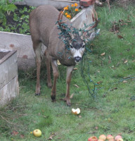 backyard visitor cropped