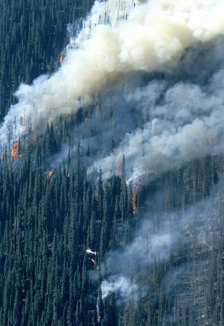 A helicopter with a drip torch in action (2003) lighting the back burn near St. Cyr Creek, Mount Revelstoke National Park. Rob Buchanan / Parks Canada photo
