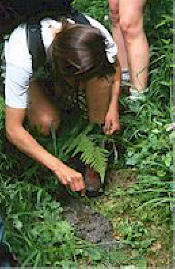 Examining bear scat. Photo credit Michael Morris