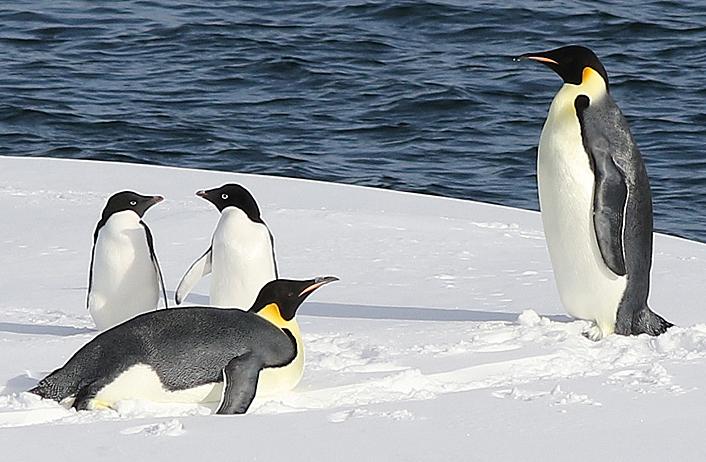 penguins_burgar